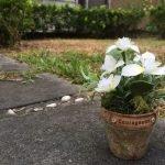 真假難辨的擬真花進修課程-白花紫露草